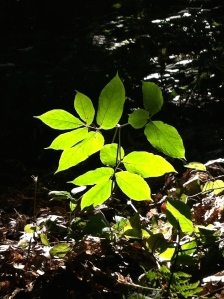 Like the photographer, poison ivy is attractive in certain light, but mostly an irritant best avoided.